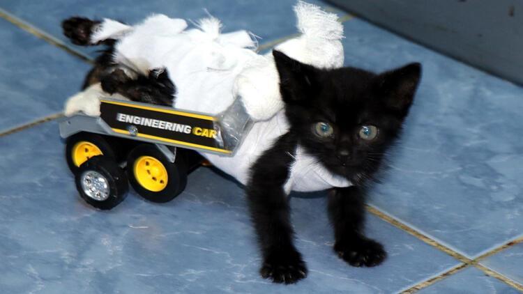 Yavru Kedi Ilk Adimlarini Yurutecle Atti
