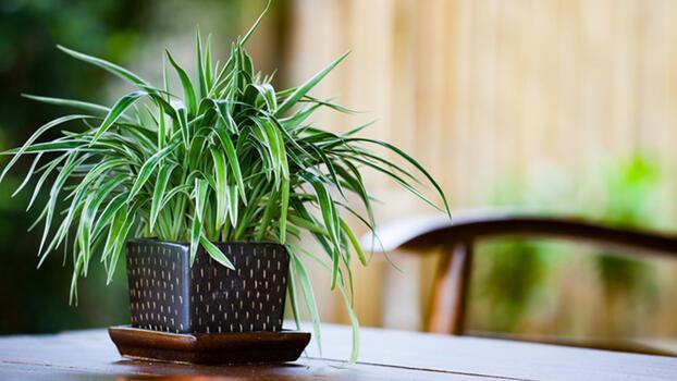 En karanlık yerde bile yetişebilen ev bitkileri