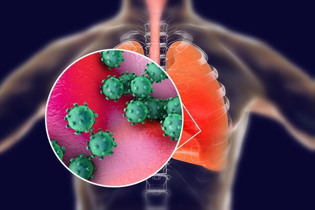 Sağlıklı yaşamın sırrı onda! Akciğerleri tertemiz yapıyor
