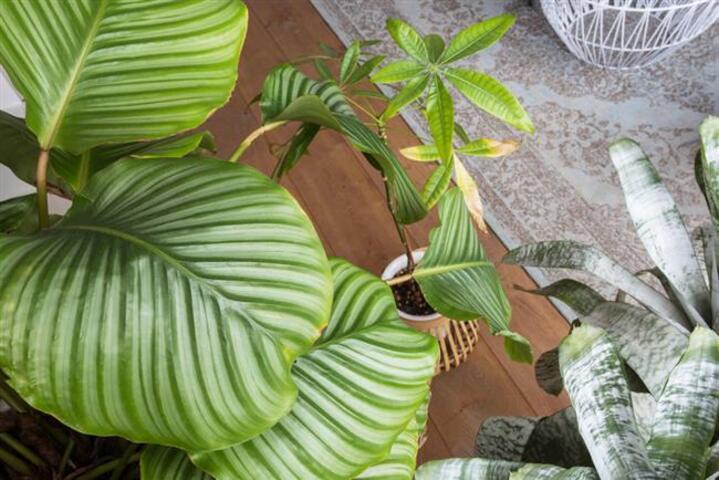 Evinizde Kolaylıkla Bakabileceğiniz 7 Harika Bitki