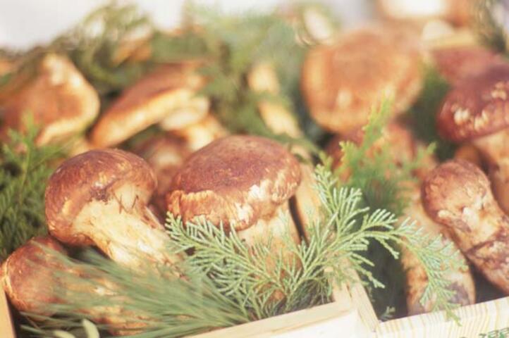 Matsutake Mantarı İle Tanışın! İşte Sağlığa Faydaları
