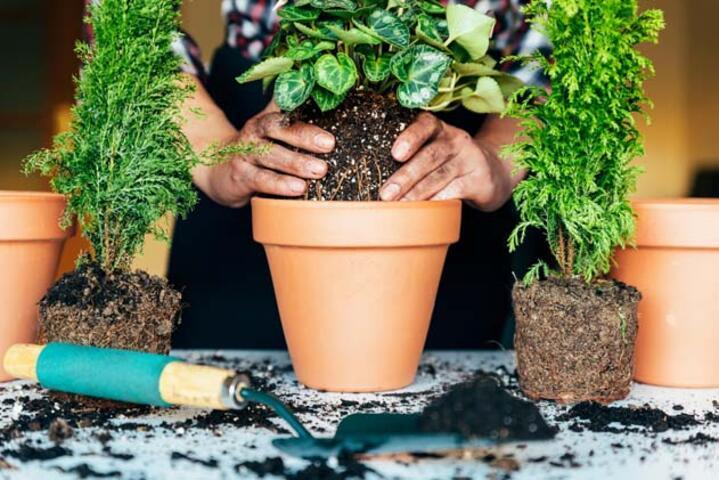 Evde Bitki Bakmanız İçin 5 Harika Neden