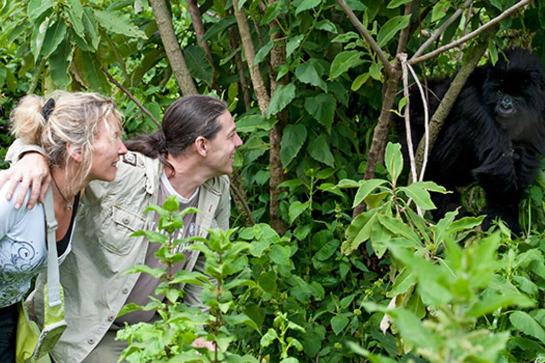 Binbir tepe ülkesinin goril ailesi Hirwa