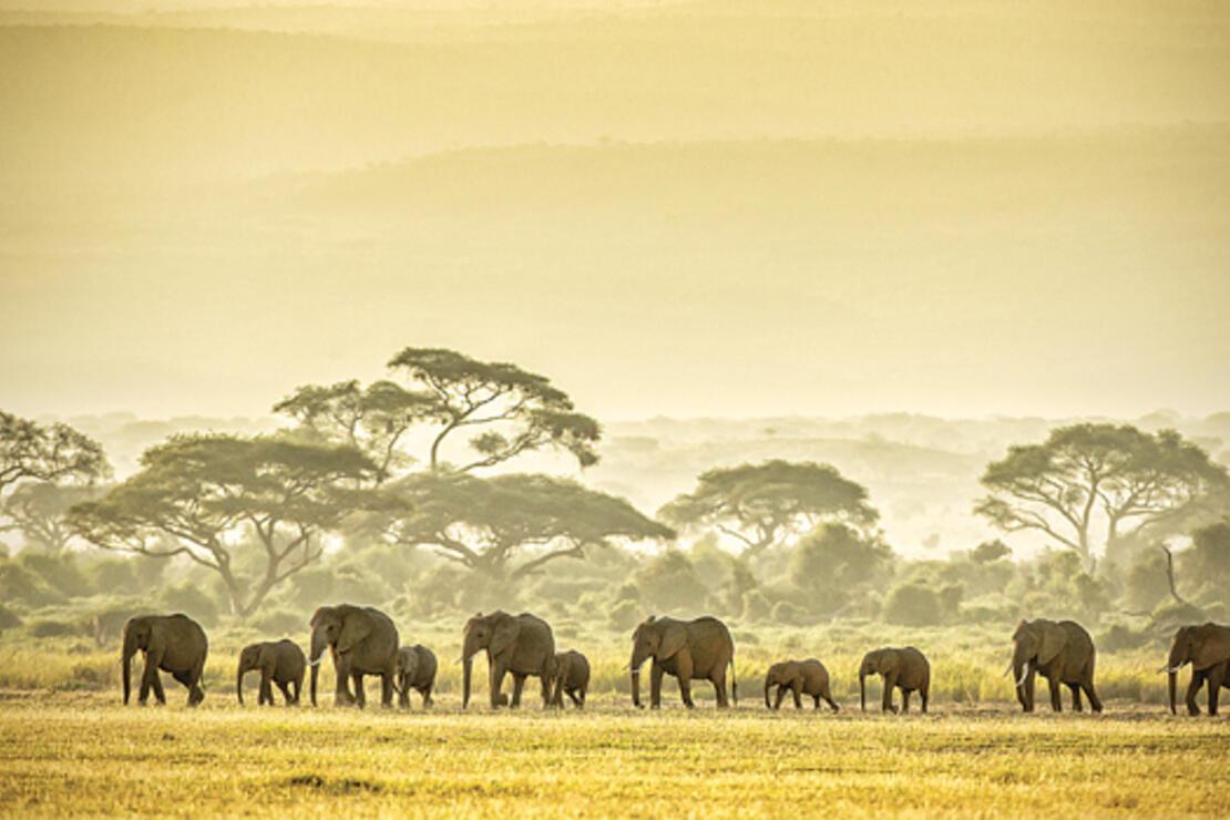 Tanzanya'da 'Büyük Göç'ün izini sürdük
