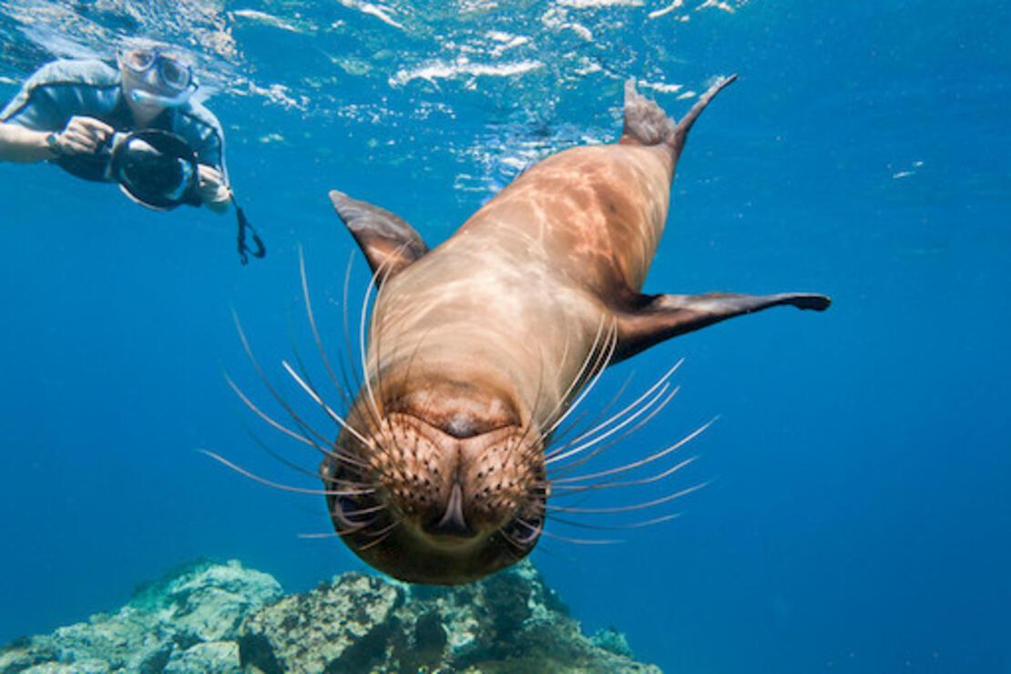 Darwin'e ilham veren Pasifik adaları: Galapagos