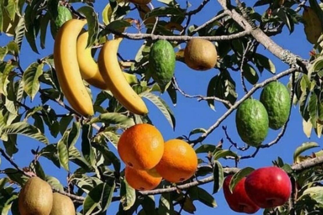 этой статье дерево фруктовый салат фото лабковский известный психолог