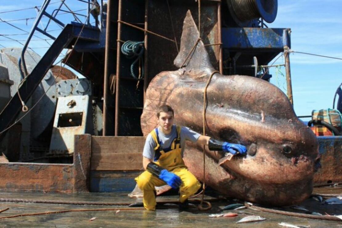 Rus balıkçı gemisinin karşılaştığı en ilginç türler