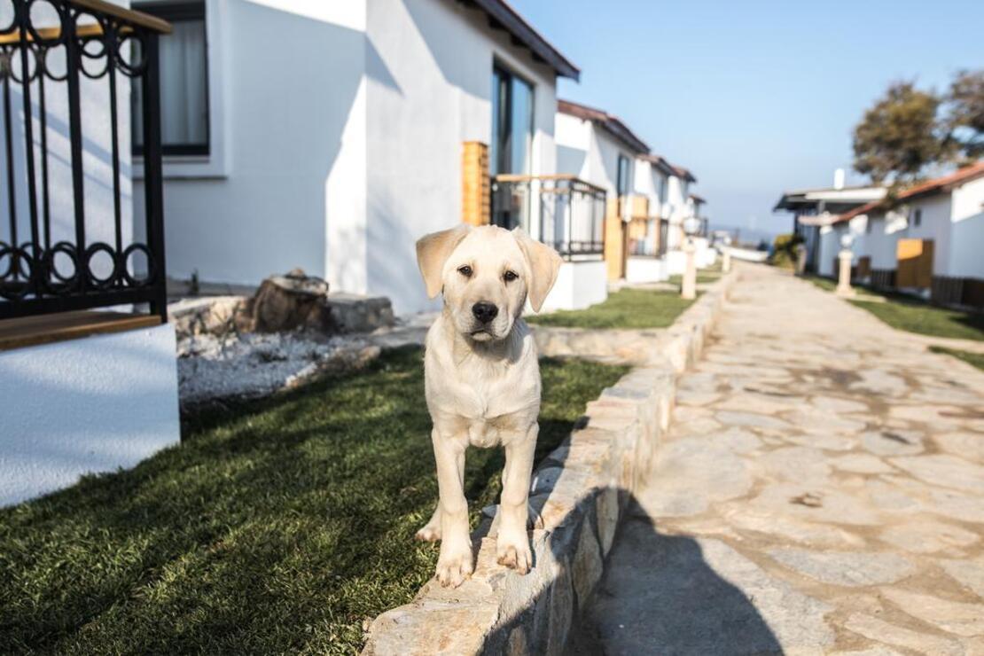 Evcil hayvanla gidilecek 10 otel