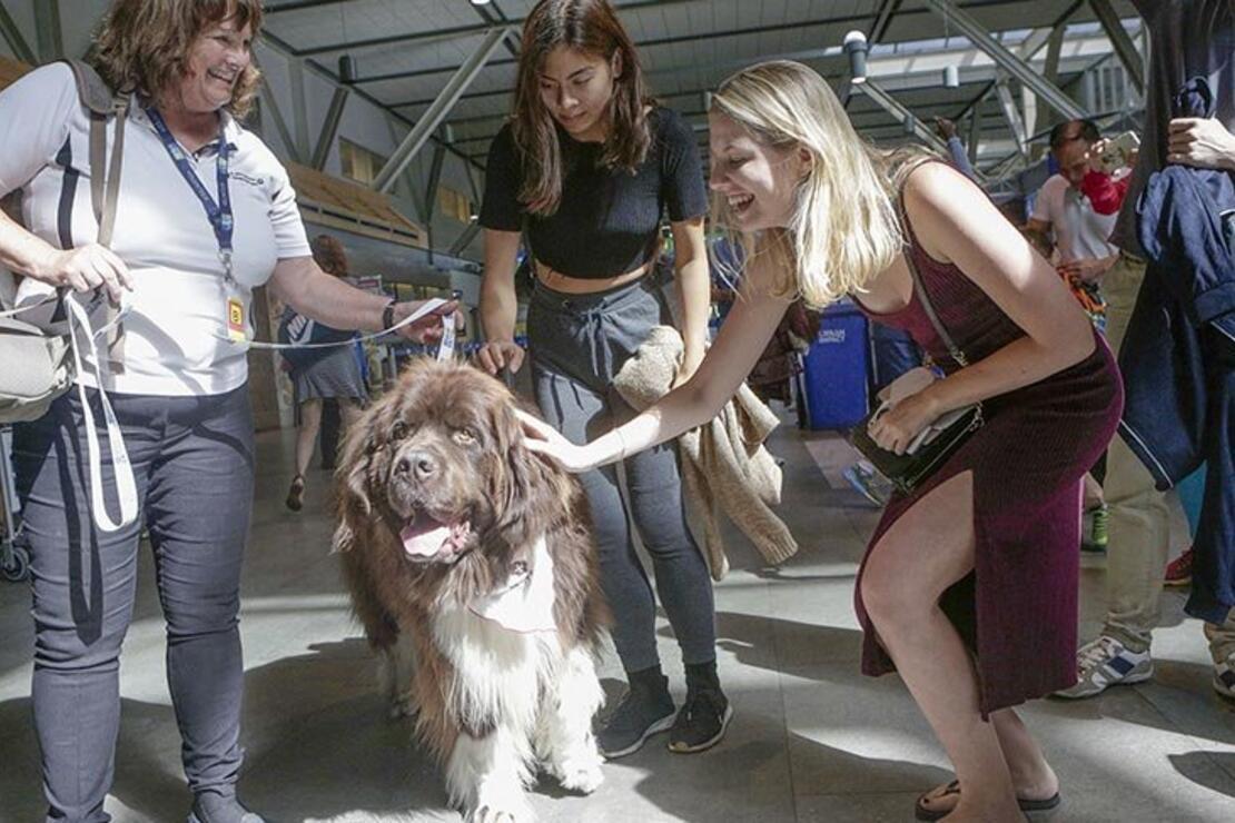 Uçaktan korkanlar için köpekli terapi yöntemi