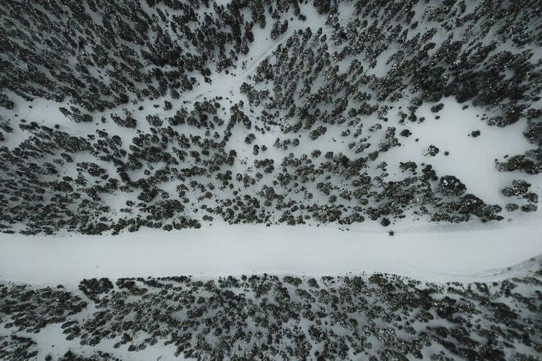 Sarıçam ormanlarında kartpostallık şölen