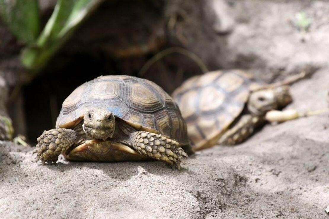 Kaplumbağalara ait bir köy: Keur Mbonatt Yi