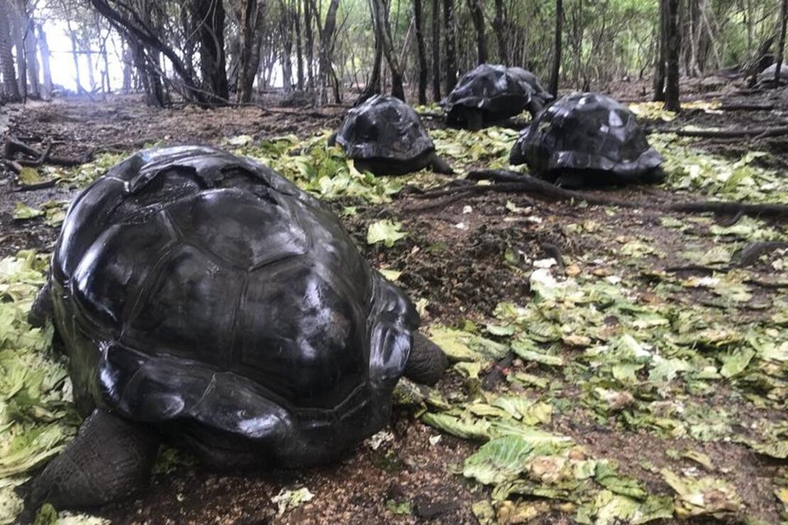 Dev kaplumbağalarıyla ünlü ada: Changuu