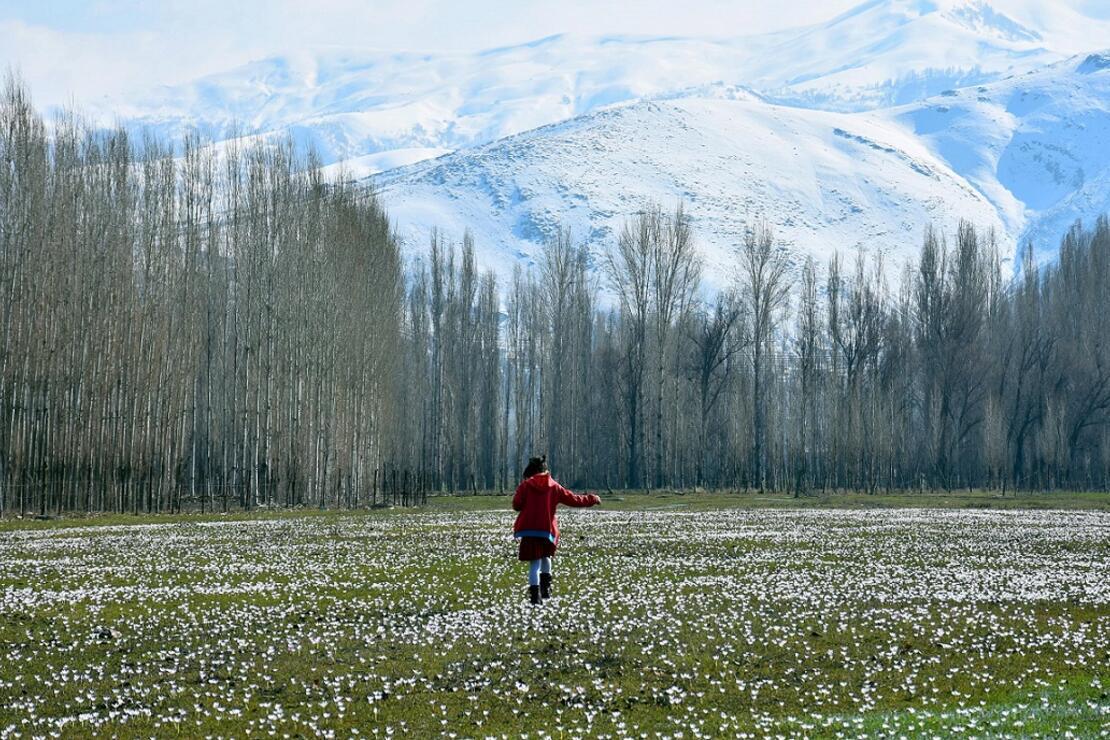 Muş'ta baharın müjdecisi kardelenler çiçek açtı