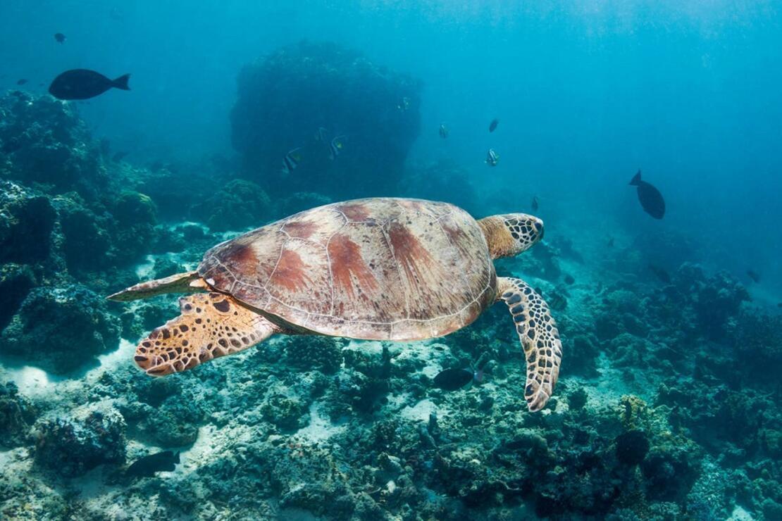30 binden fazla canlı türünün nesli tükenme tehlikesi altında
