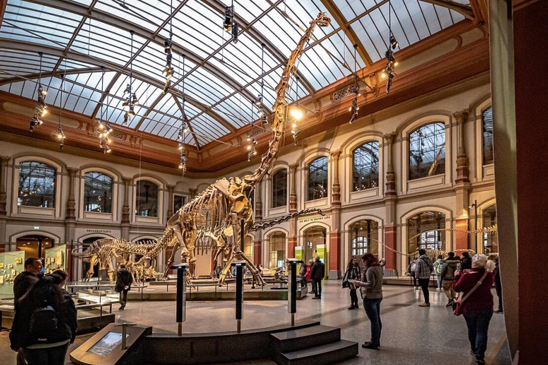 Berlin'in muhteşem doğa tarihi müzesi