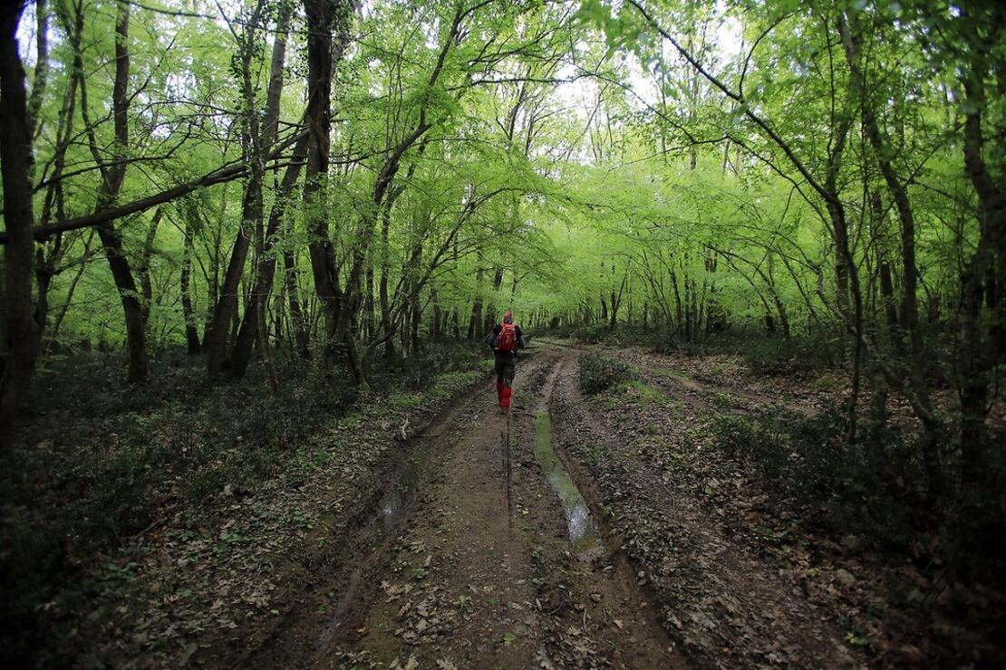 Trakya'da bir cennet: İğneada Longoz Ormanları