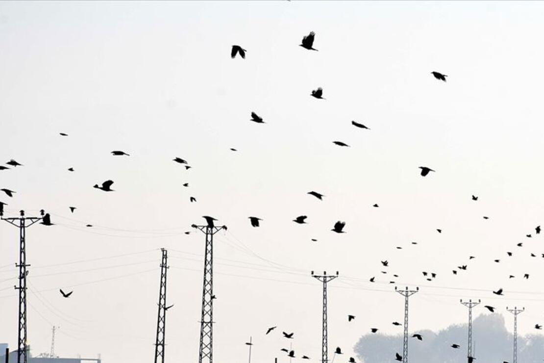 Koronavirüs günlerinde 'kuşların göçerliğine tanık olun' önerisi