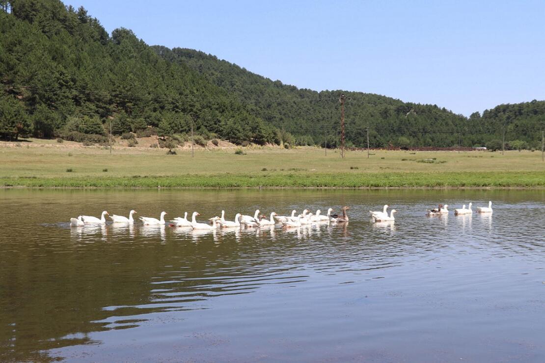 Kuş cenneti 'Yayla Gölü' kesin korunacak hassas alan ilan edildi