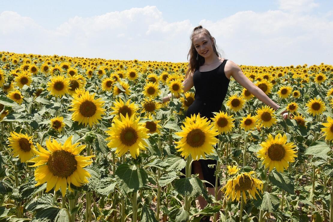 Eskişehir ovaları ayçiçekleriyle sarıya büründü... Fotoğraf tutkunlarının doğal stüdyosu haline geldi.