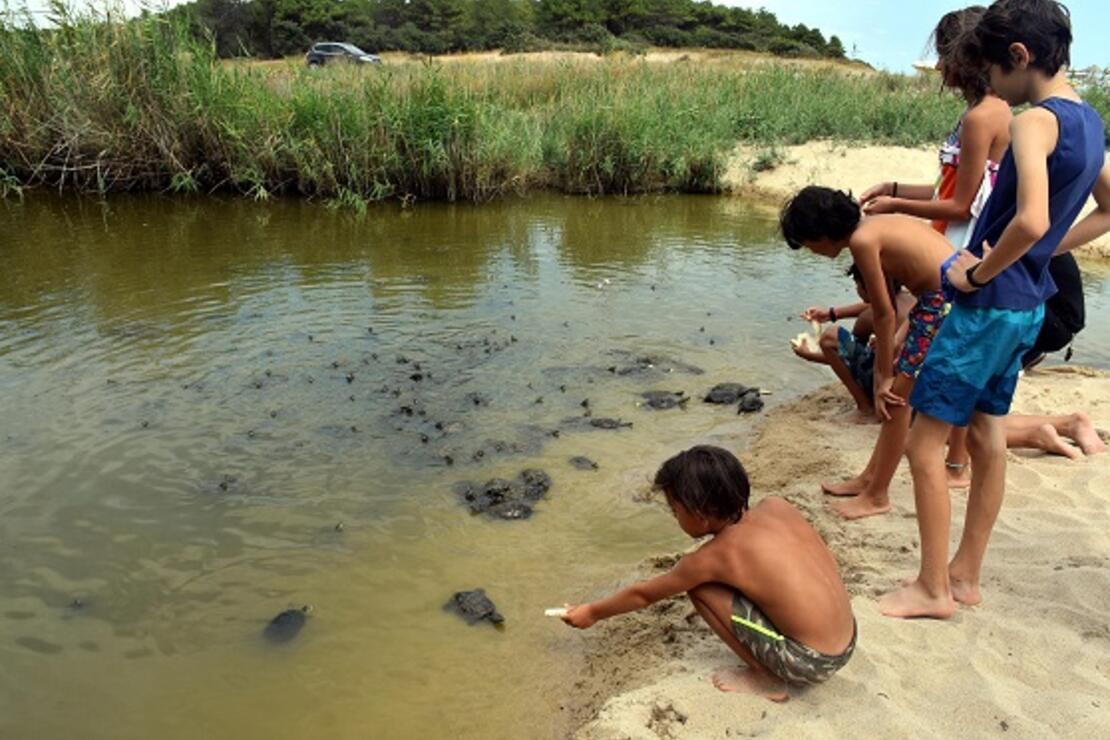 Edirne'de tatilciler kaplumbağaları elleriyle besliyor