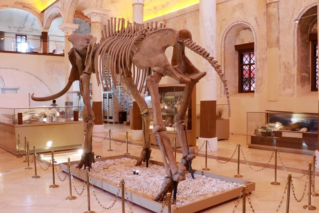 İki milyon yıllık fosiller, bu müzede sergileniyor