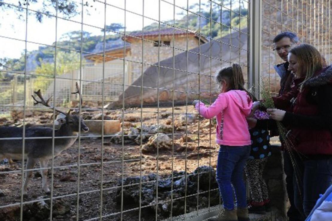Antalya Hayvanat Bahçesi Nerede? Antalya Hayvanat Bahçesi Hayvanları, Giriş Ücreti, Çalışma Saatleri Ve İletişim Bilgileri (2020)