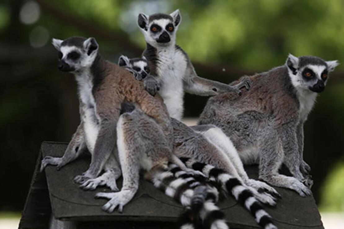 Boğaziçi Hayvanat Bahçesi Nerede? Boğaziçi Hayvanat Bahçesi Hayvanları, Giriş Ücreti, Çalışma Saatleri Ve İletişim Bilgileri (2020)