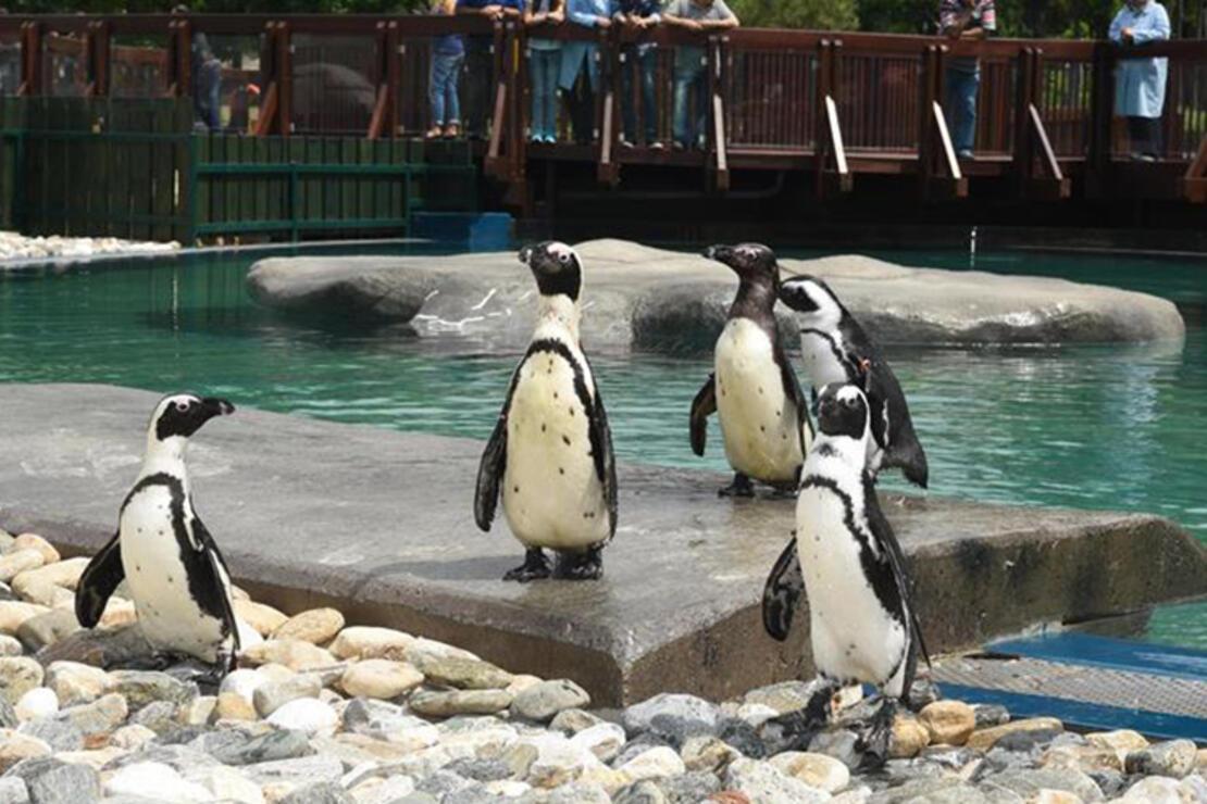 Bursa Hayvanat Bahçesi Nerede? Bursa Hayvanat Bahçesi Hayvanları, Giriş Ücreti, Çalışma Saatleri Ve İletişim Bilgileri (2020)