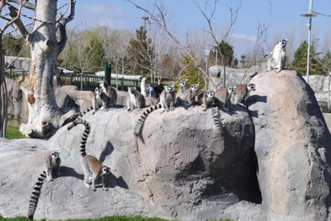 Eskişehir Hayvanat Bahçesi Nerede? Eskişehir Hayvanat Bahçesi Hayvanları, Giriş Ücreti, Çalışma Saatleri Ve İletişim Bilgileri (2020)