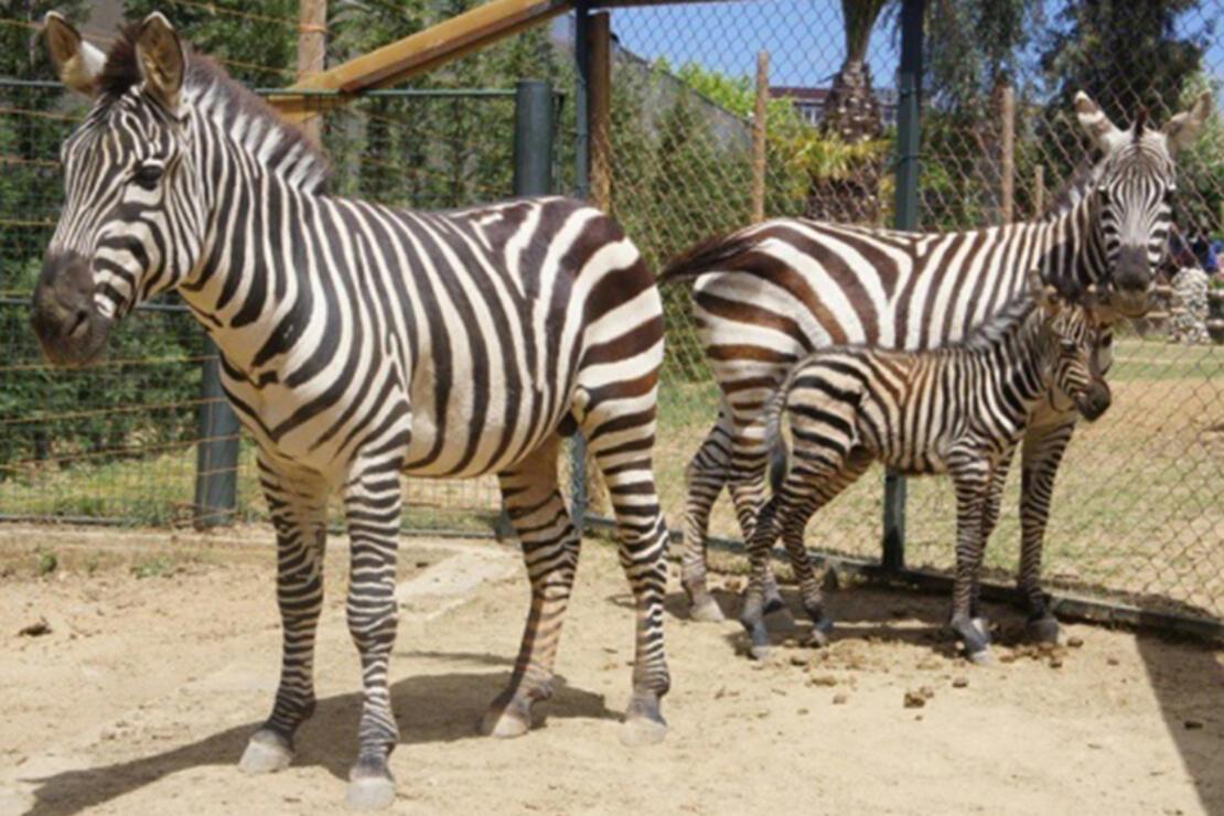 Faruk Yalçın Darıca Hayvanat Bahçesi Nerede? Darıca Hayvanat Bahçesi Hayvanları, Giriş Ücreti, Çalışma Saatleri Ve İletişim Bilgileri (2020)