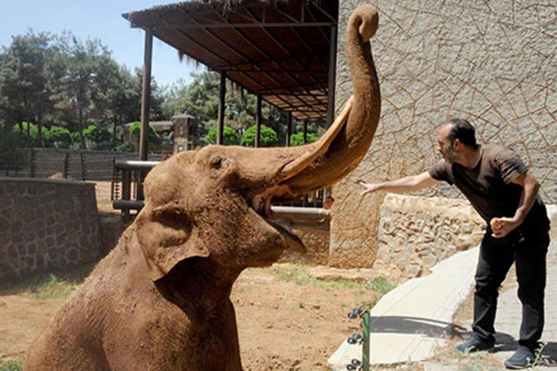 İstanbul Hayvanat Bahçesi Nerede? İstanbul Hayvanat Bahçesi Hayvanları, Giriş Ücreti, Çalışma Saatleri Ve İletişim Bilgileri (2020)