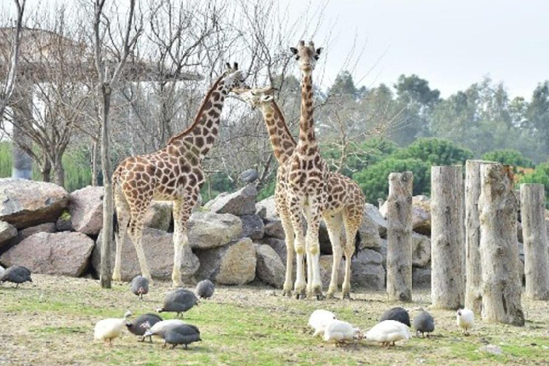 İzmir Hayvanat Bahçesi Nerede? İzmir Hayvanat Bahçesi Hayvanları, Giriş Ücreti, Çalışma Saatleri Ve İletişim Bilgileri (2020)