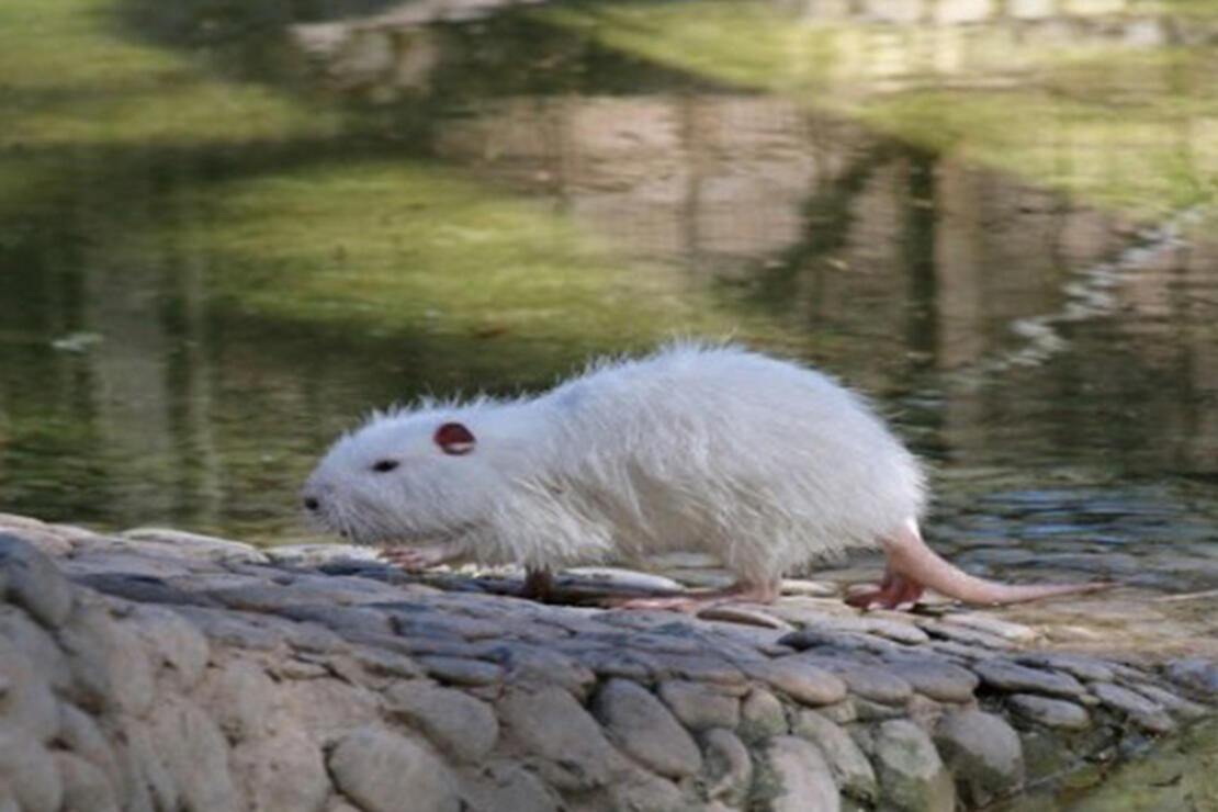 Polonezköy Hayvanat Bahçesi Nerede? Polonezköy Hayvanat Bahçesi Hayvanları, Giriş Ücreti, Çalışma Saatleri Ve İletişim Bilgileri (2020)