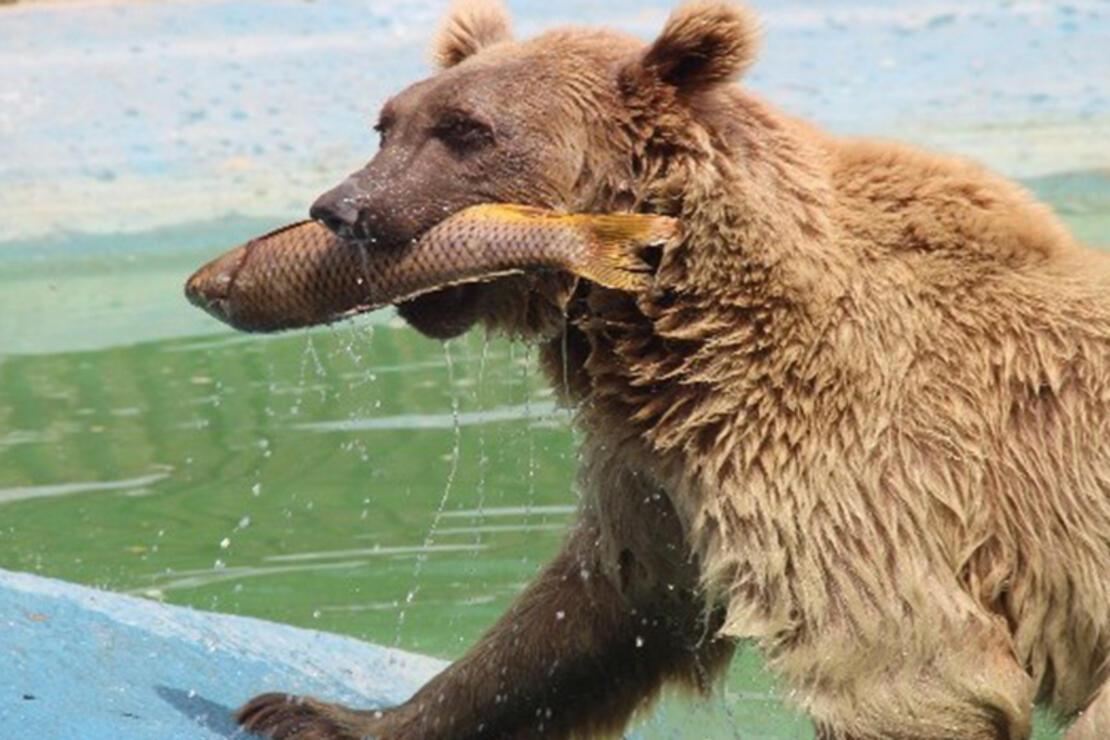Konya Hayvanat Bahçesi Nerede? Konya Hayvanat Bahçesi Hayvanları, Giriş Ücreti, Çalışma Saatleri Ve İletişim Bilgileri (2020)