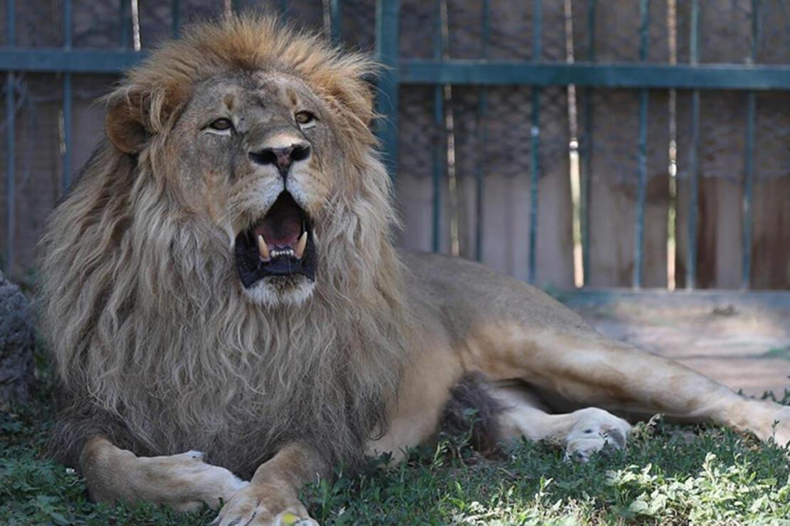 Kayseri Hayvanat Bahçesi Nerede? Kayseri Hayvanat Bahçesi Hayvanları, Giriş Ücreti, Çalışma Saatleri Ve İletişim Bilgileri (2020)
