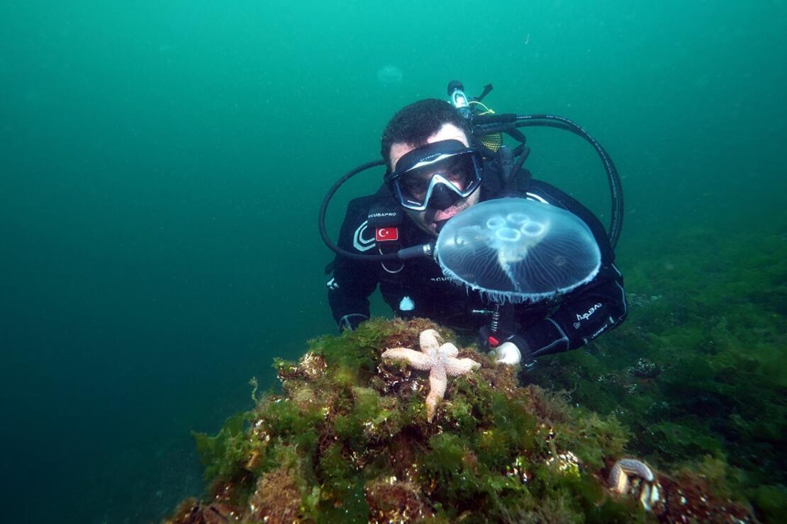 Marmara'da görülen ay denizanası için uyarı: Değdiğinde yakar
