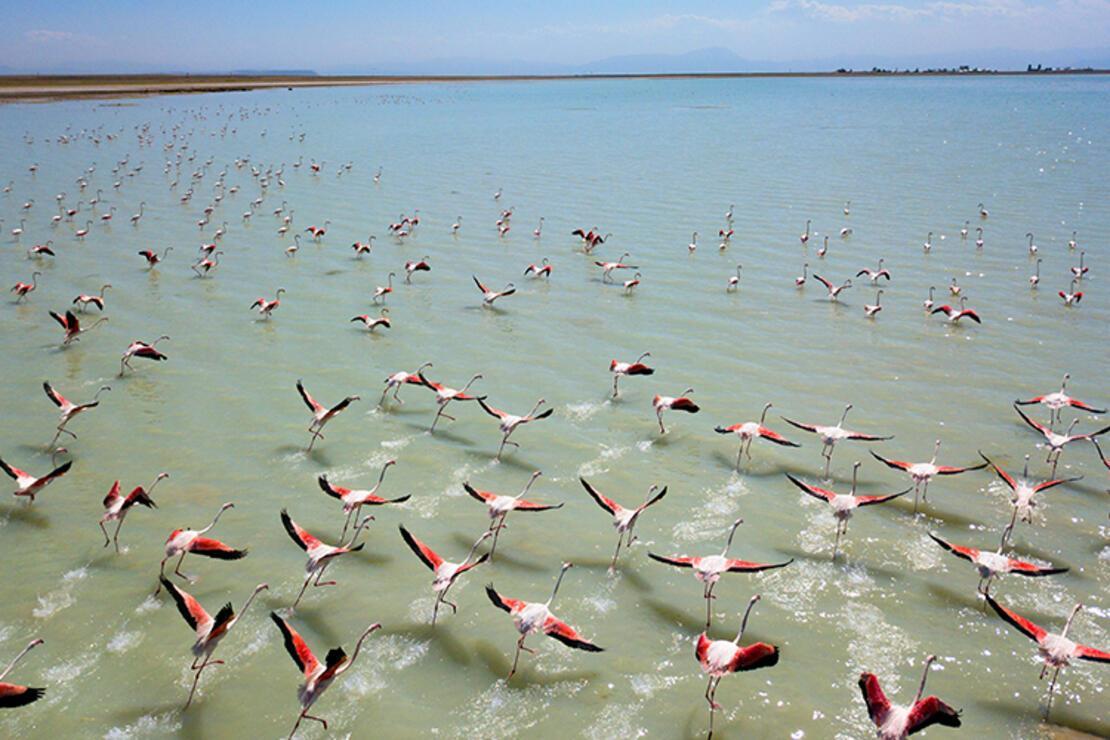 Flamingolar Arin Gölü'nü renklendiriyor