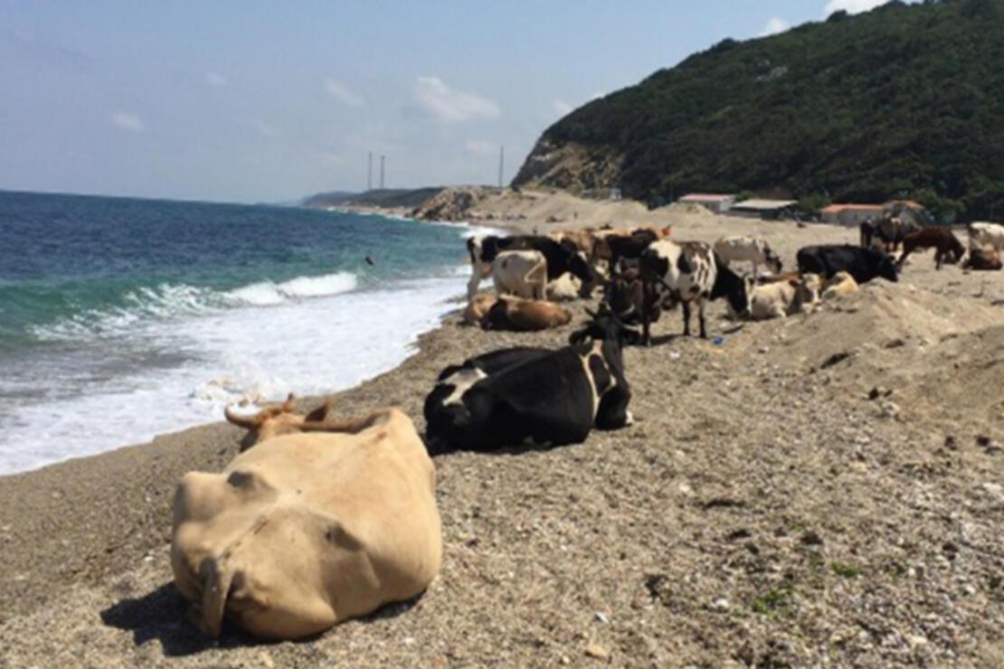Çilingoz Plajı Nerede Ve Nasıl Gidilir? Çilingoz Plajı Özellikleri, Kamp İle Konaklama Detayları Ve Giriş Ücreti (2020)