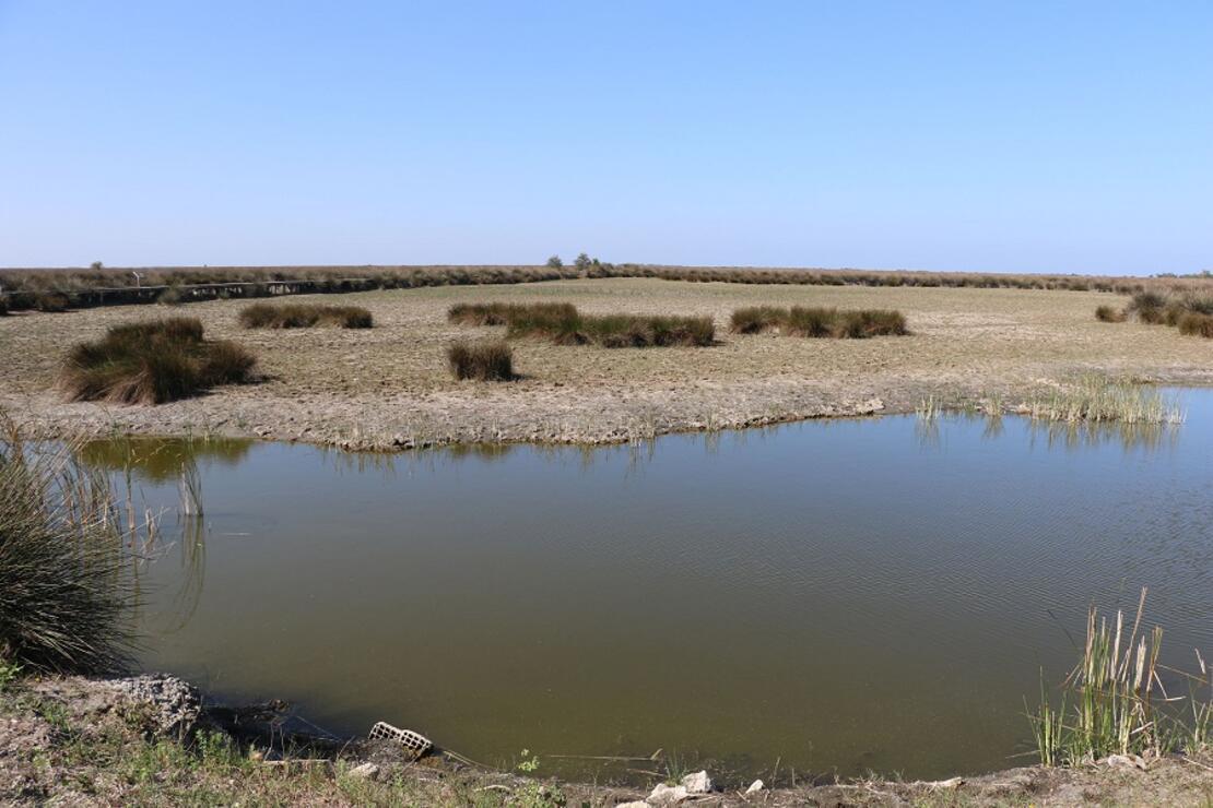 Kızılırmak Deltası'ndaki yangın, UNESCO sürecini etkilemeyecek