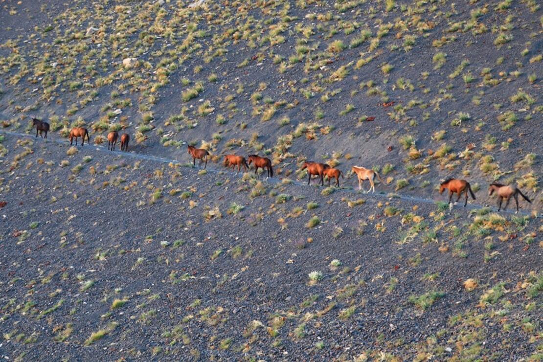 Hakkari'de yılkı atları, dronla görüntülendi