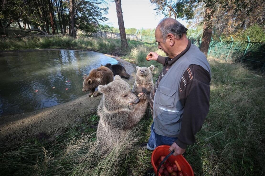 Türkiye'nin tek ayı barınağı Ovakorusu'nun maskotu oldular