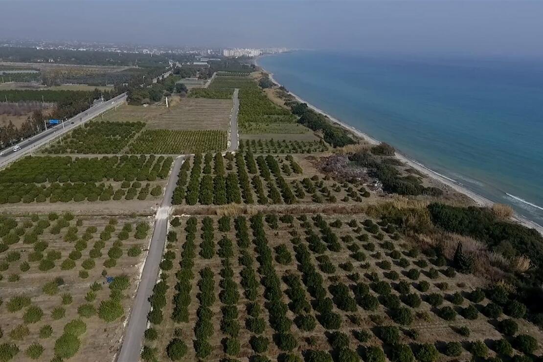 Mersin'de Alata Sahili 'kesin korunacak hassas alan' ilan edildi