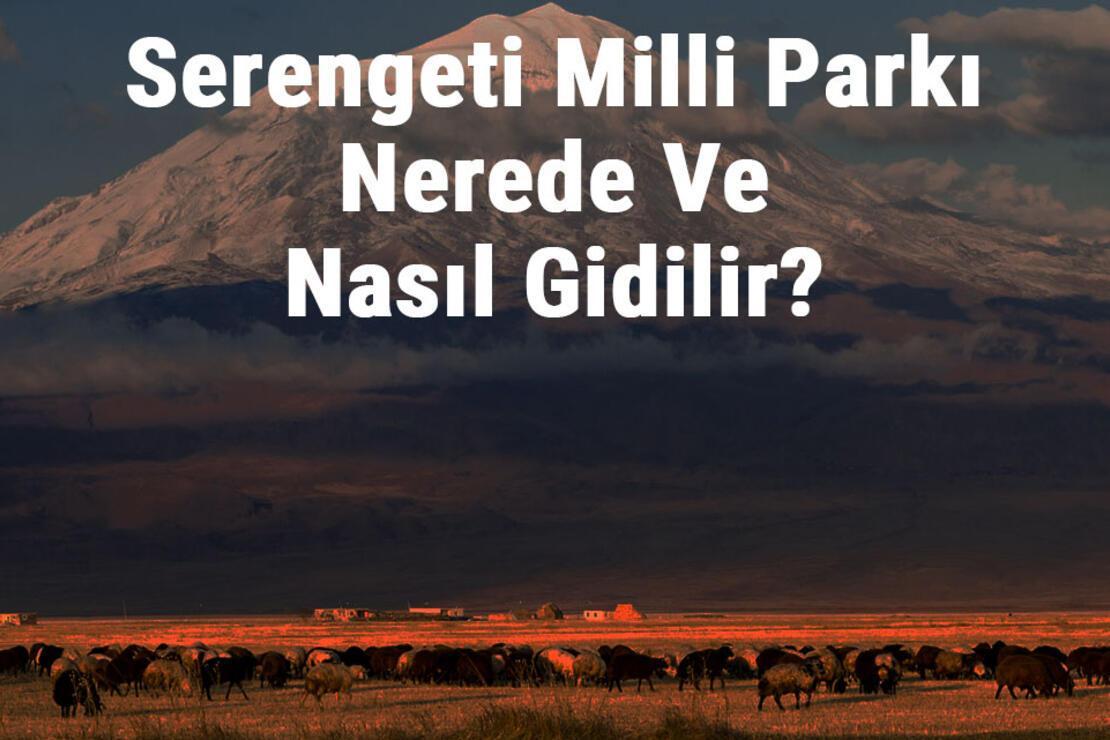 Serengeti Milli Parkı Nerede Ve Nasıl Gidilir? Serengeti Milli Parkı Konaklama, Kamp, Giriş Ücreti Ve Özellikleri Hakkında Bilgi
