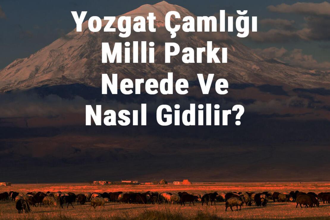 Yozgat Çamlığı Milli Parkı Nerede Ve Nasıl Gidilir? Yozgat Çamlığı Milli Parkı Konaklama, Kamp, Giriş Ücreti Ve Özellikleri Hakkında Bilgi