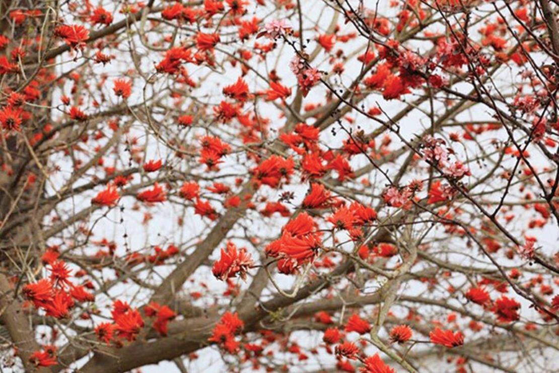Türkiye'ye bahar geldi, her yer çiçek açtı