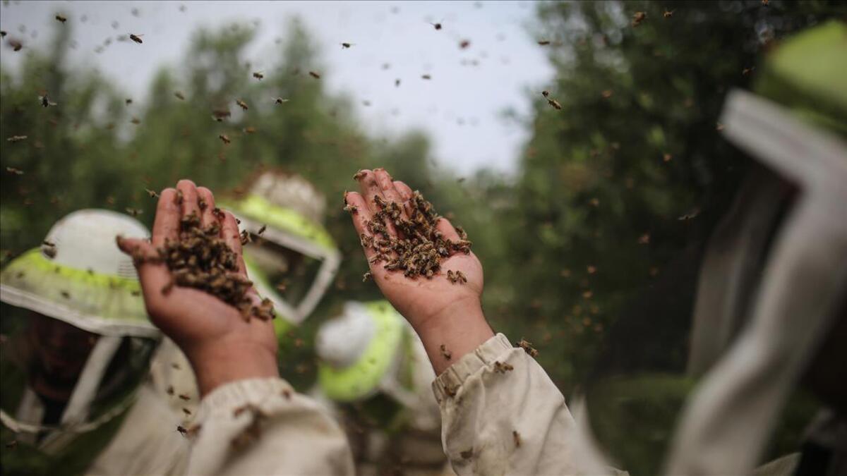 Türkiye'nin yıllık bal üretimi 110 bin ton - Son Dakika Ekonomi Haberleri