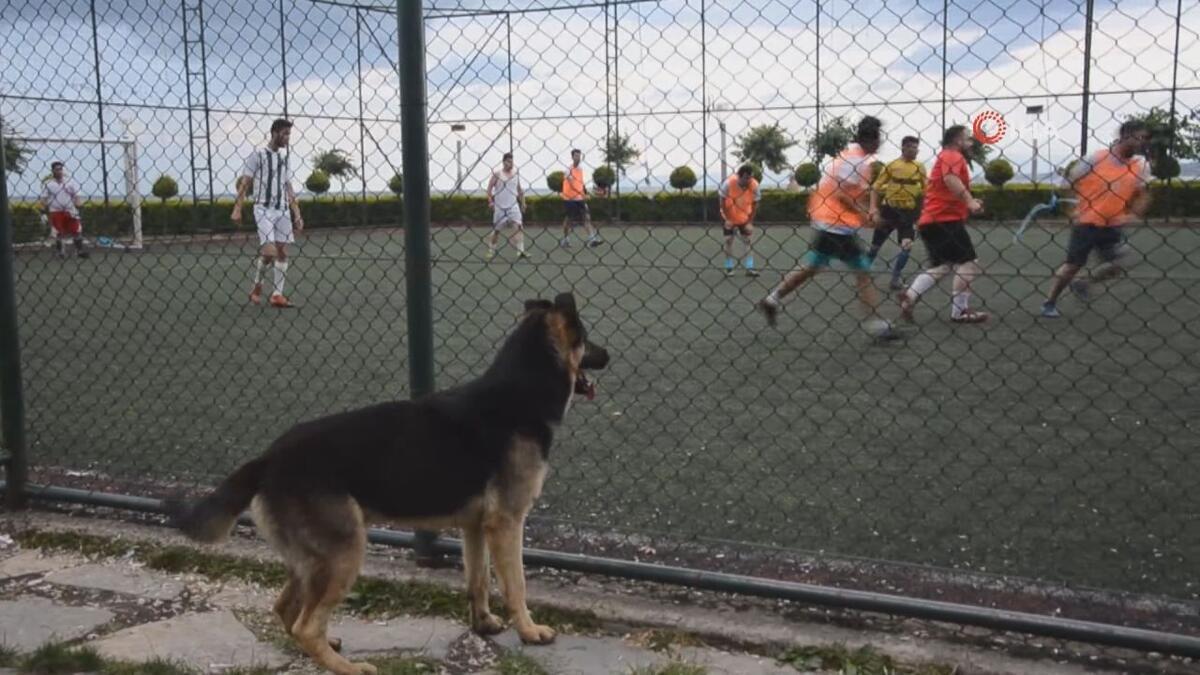 Sokak köpeğinin futbol tutkusu