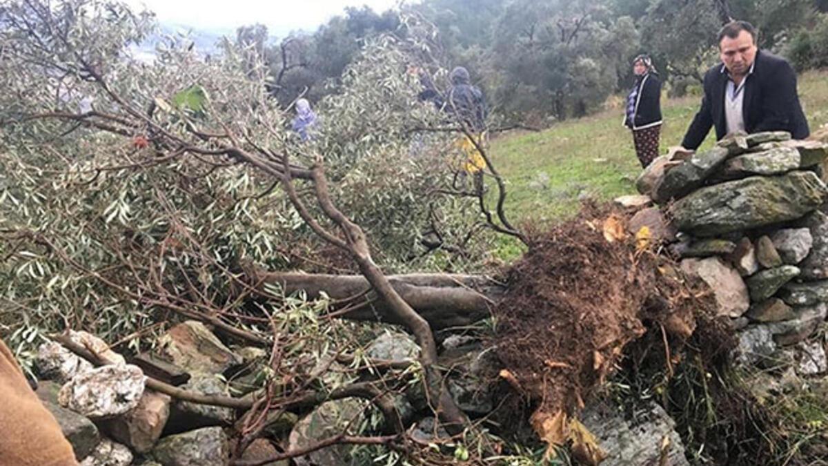 Yıktı geçti... Evlerde hasar var ağaçlar yerinden söküldü