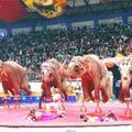Büyükşehir'in filleri 'votka tutkunu' çıktı