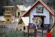 Mandıra filozofu filminden etkilendi, kedi köyü kurdu... İşte o kareler